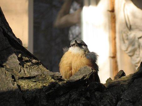 Songbird, Young Bird, Precocial, Inexperienced, Green