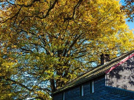 Tree, Autumn, House, Leaves, Yellow, Golden Autumn