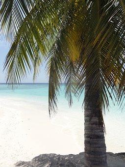 Palm, Beach, Maldives, Sea, Holiday, Summer, Sun