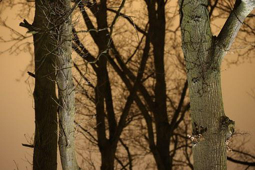 Tree Trunks, Branches, Winter, Outdoor, Forest, Natural