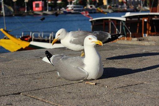 Porto River, Seagull, Right Front Side