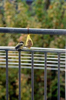 Sparrow, Bird, Food, Animal, Nature, Close Up, Birds