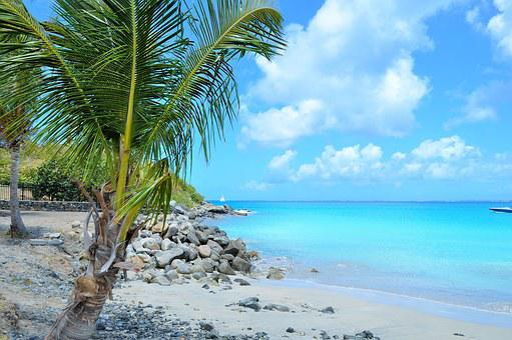 West Indies, Paradise, Caribbean, Coconut, Sun