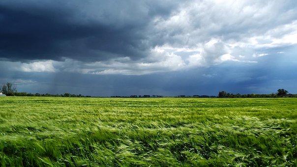 Storm, Wheat, Cloud, Wheatfield, Plains, Landscape
