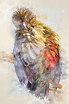 Bird, Plumage, Feathers, Ave, Avian, Animal