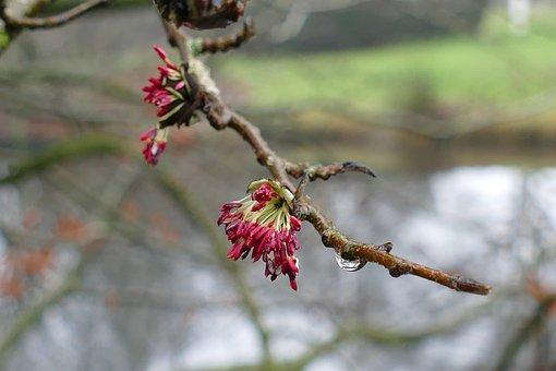 Tree, Branch, Flower, Wet, Drop, Water, Cold, Mist, Fog