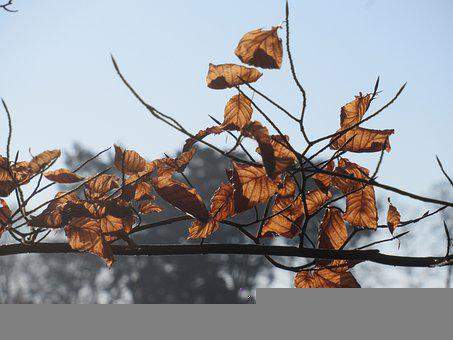 Leaves, Transience, Winter, Fall Foliage, Nature