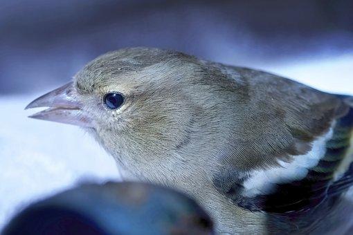 Bird, Wild, Nature, Macro, Rescue, Animal, Animal World