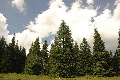 Landscape, Mountain, Romania, Mountains, Sky, Forest