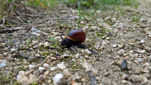 Snail, Black, Slug, Animal