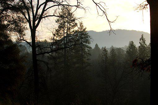 Trees, Woods, Forest, Sunrise, Mist, Light, Autumn