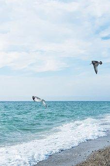 Sea, Crimea, Gulls, Birds, Beach, Summer, Landscape