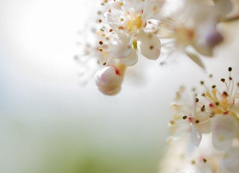 Flowers, Pistils, Close Up, Petals, Blossom, Bloom