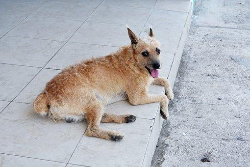 Dog, Animal, Sidewalk, Pet, Domestic Dog, Canine