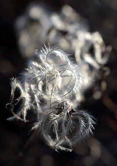 Branch, Plant, Flora, Botany, Detailed, Nature, Garden