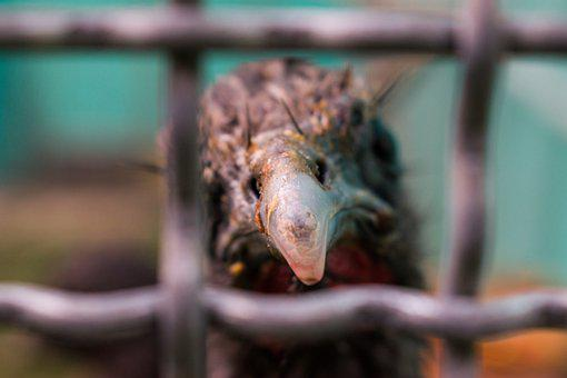Bird, Beak, Cage, Imprisoned, Captured, Animal