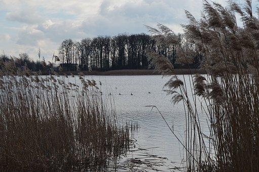 Lake, Ducks, Forest, Bird