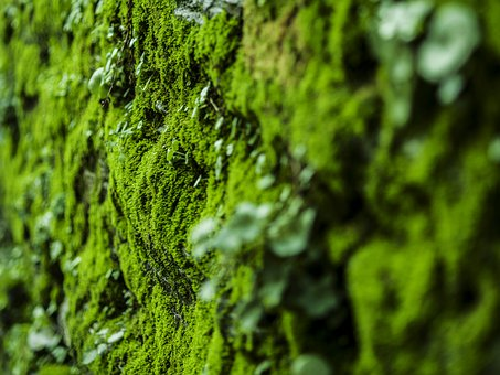 Moss, Nature, Green, Forest, Macro, Tree, Leaf, Fall