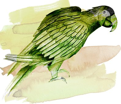 Parrot, Bird, Ara, Feather, Plumage, Tropical, Exotic