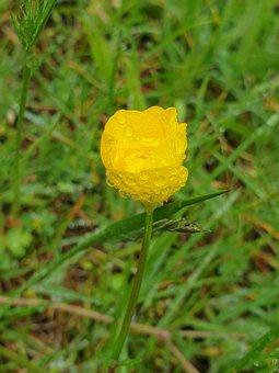 Yellow, Flower, Drops