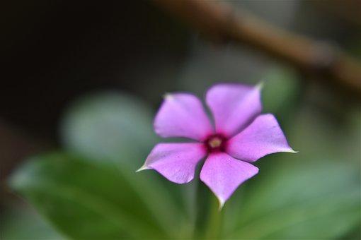 Flower, Petals, Blossom, Bloom, Flora, Violet, Floral