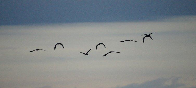 Birds, Flight, Pigeons, Colombia