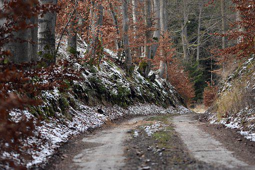 Pathway, Road, Trees, Snow, Forest, Nature, Trail