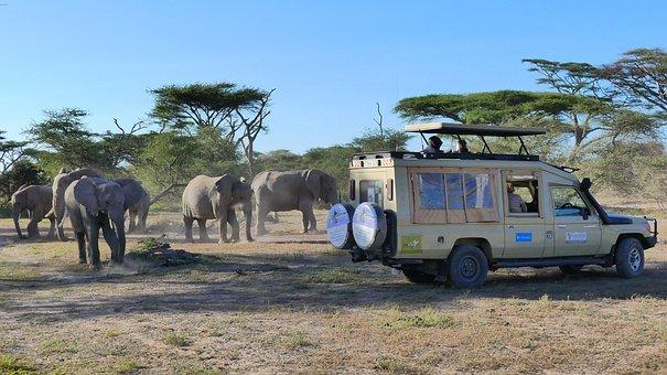 Tanzania Safari, Africa Safari, Earthlife Expeditions