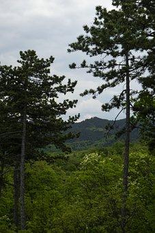 Pine, Wood, Forest, Hill, Landscape, Background, Cloud