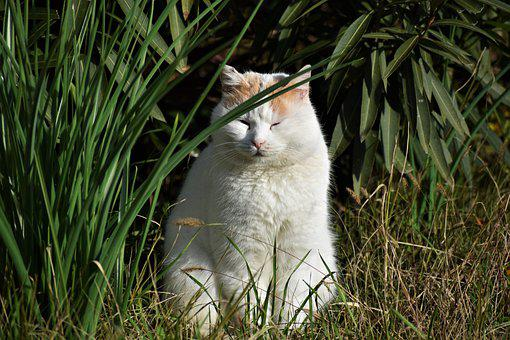 Cat, Feline, White, Stray, White Cat, Stray Cat, Plants