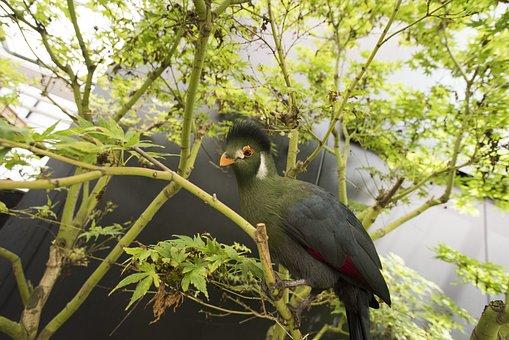 Animal, Bird, Nature, Fauna, Flying, Wildlife