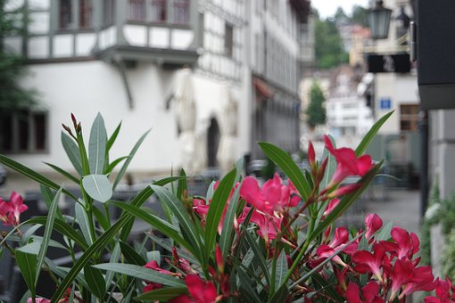 Flowers, Plant, Town, Leaves, Bloom, Blossom