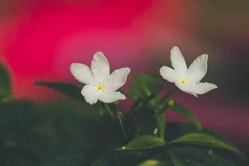 Flowers, Plant, Garden, White Flowers, Bloom, Blossom