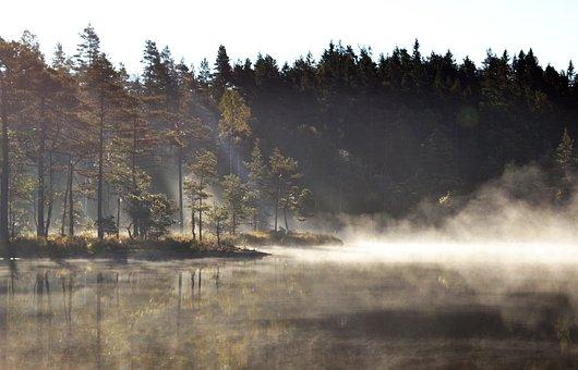 Lake, Fog, Sunrise, Bank, Trees, Forest, Reflection