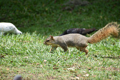 Cute Squirrel, Rodent, Creeping, Hunting, Wildlife