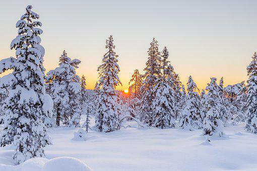 Winter, Conifers, Sunset, Snow, Snowy, Hoarfrost
