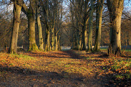 Trees, Path, Woods, Woodlands, Forest, Forest Path