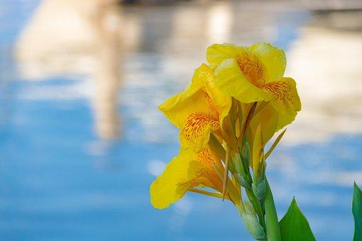 Flower, Yellow, Nature, Bloom, Garden