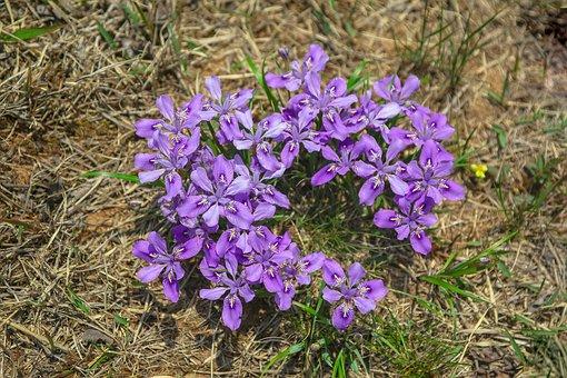 Each Time Vary, Spring Flowers, Field, Flowers