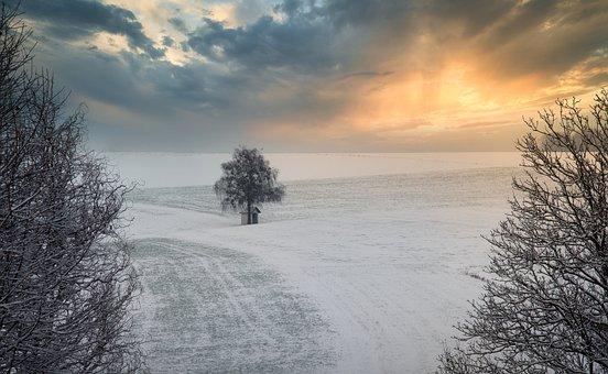 Snow, Trees, Sunset, Field, Winter, Frost, Frozen