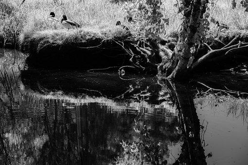 Lake, Bank, Monochrome, Reflection, Water, Tree, Grass
