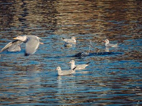 Animal, Background, Beak, Beautiful, Beauty, Birds