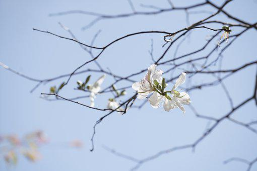 Flowers, Branches, White Flowers, Bloom, Blossom, Flora