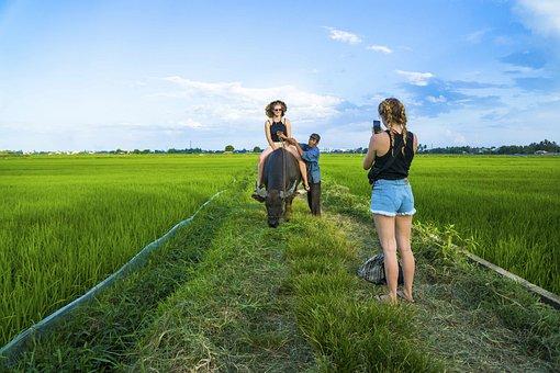 Tourists, Women, Buffalo, Ride, Riding