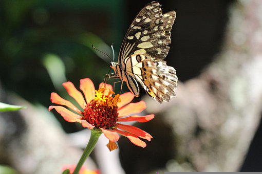 Butterfly, Flower, Pollination, Insect, Bug, Antennae