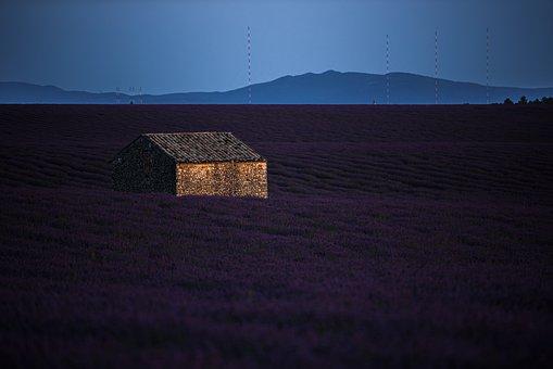 House, Fields, Lavenders, Hut, Cottage, Lavender Fields