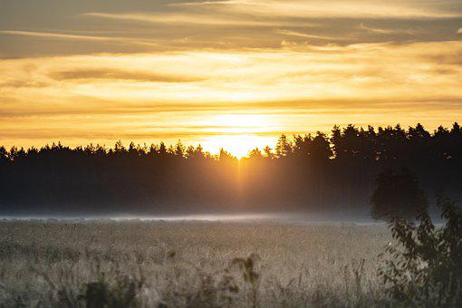 Forest, Fog, Morning, Sun, Dawn, Sky, View, Summer