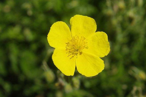 Flower, Plant, Petals, Yellow Flower, Bloom, Blossom