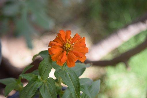 Flowers, Plants, Diyala, Summer, Tree, Green, Blossom