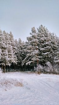 Trees, Forest, Frozen, Ice, Snow, Frost, Cold, Winter